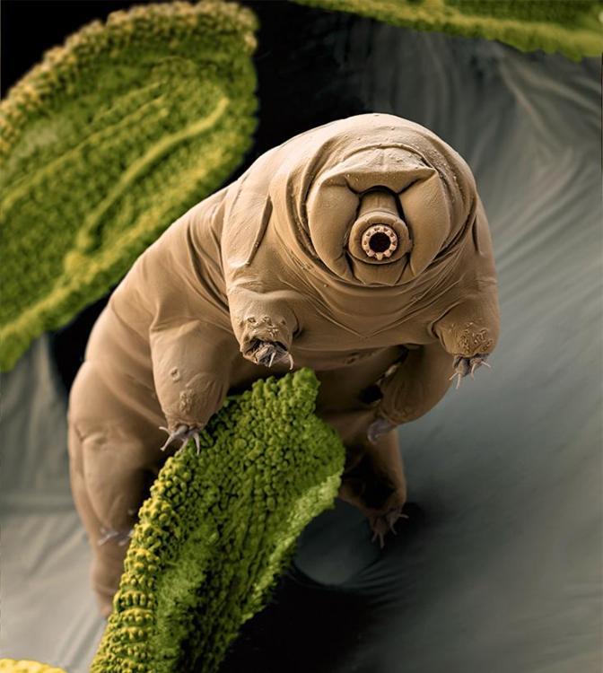 tardigrade_cover.jpg